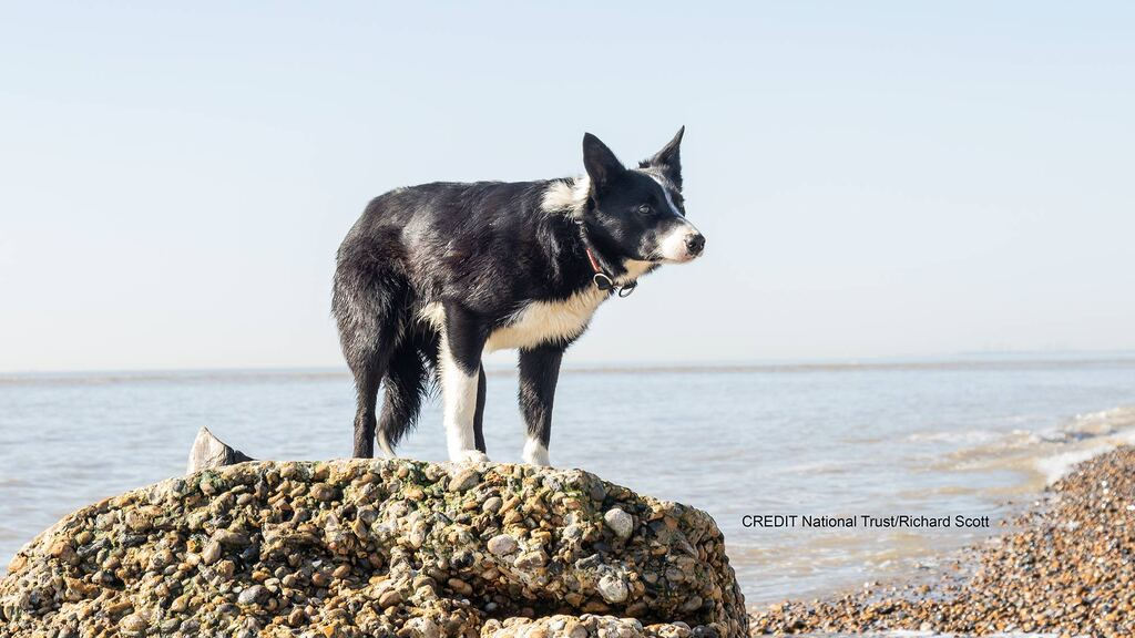 Sea-faring sheepdog sails to work in boat off Suffolk coast