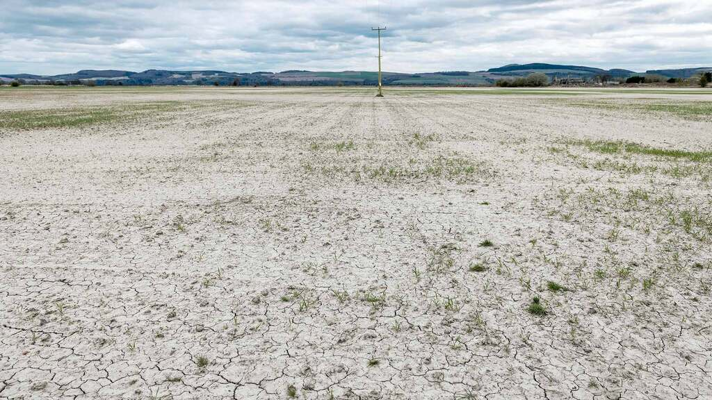 Dry weather stunts grass and crop growth
