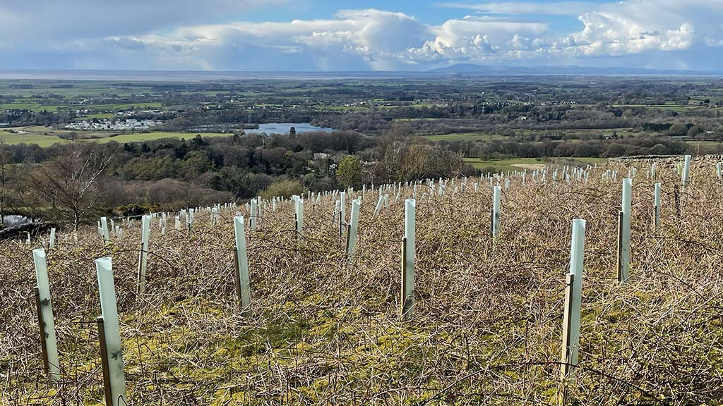 New English tree planting grant scheme 'deeply unattractive' to farmers