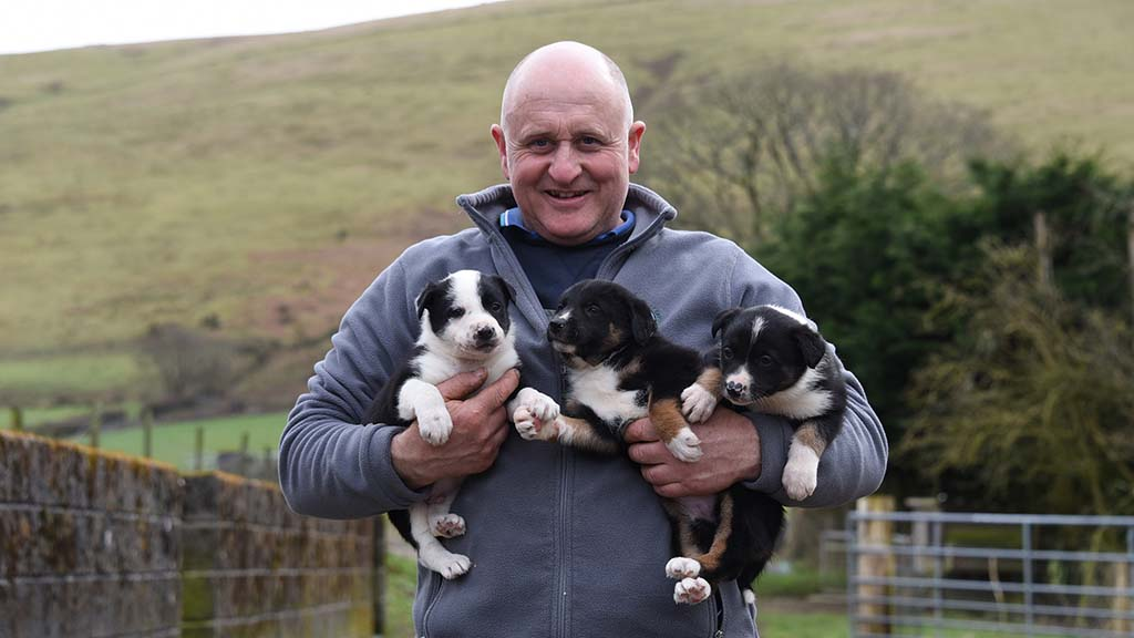 Local provenance helps Welsh upland farmer thrive