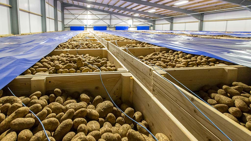 Cold weather could heat up potato market