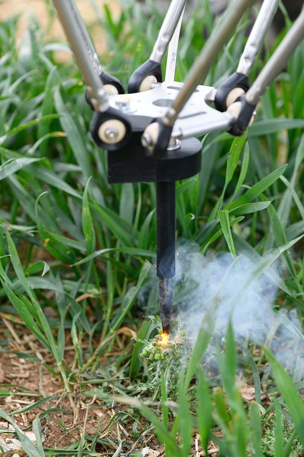 Probes direct an electrical current into the weed which travels down to the root and effectively 'cooks' it, leaving the weed to die off.