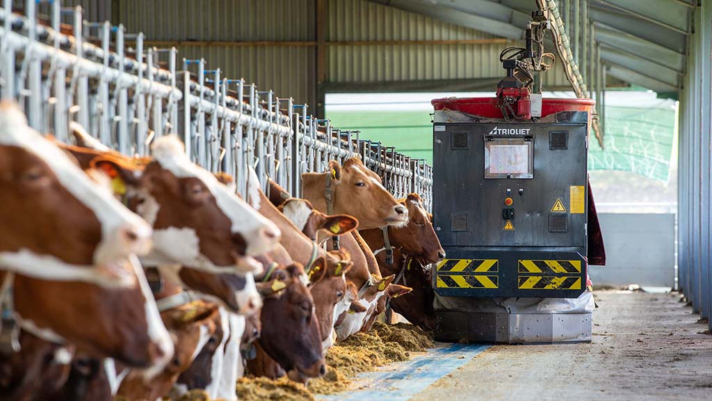 Robot room service for cows: exploring the benefits of an automated feeding system
