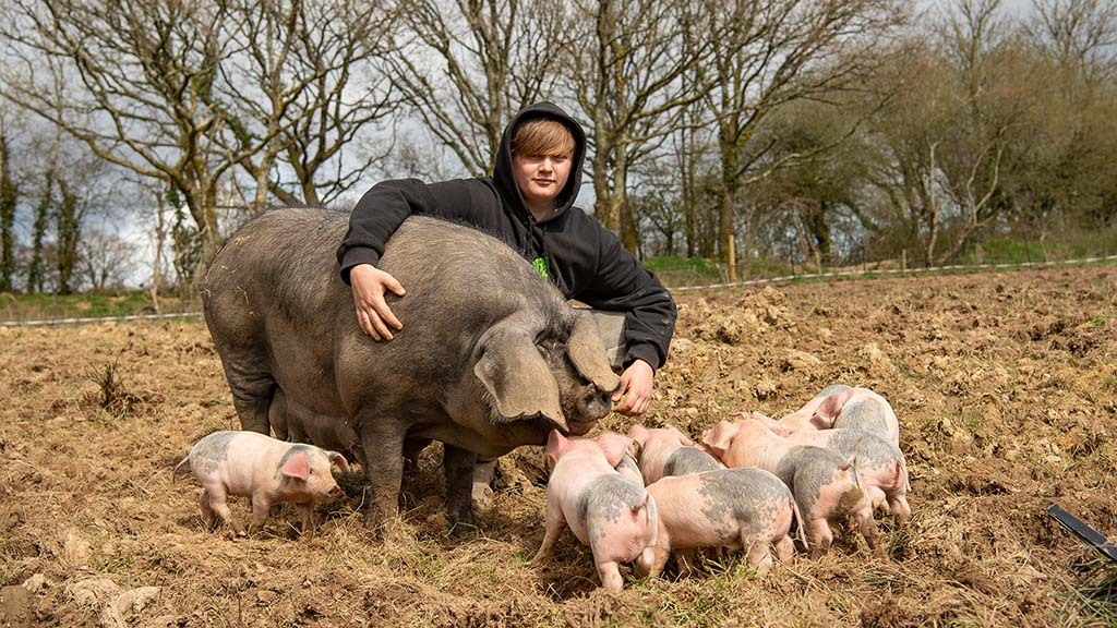 New entrant starts thriving pig business - 'The support is not there before you are 18'