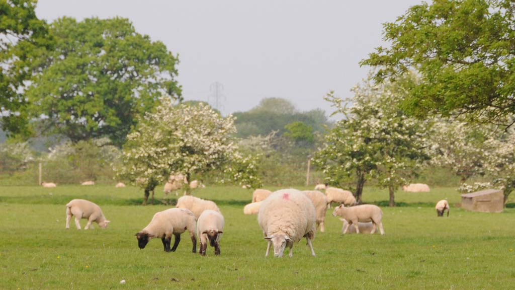 Call for Natural England funding boost to be used to help farmers join ELM