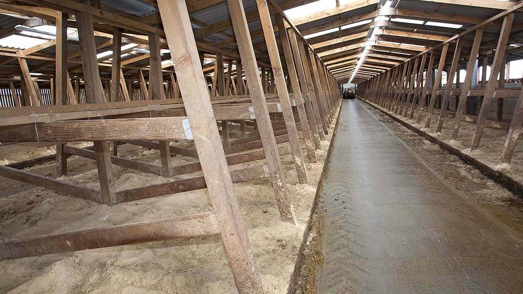 Covid and Brexit see timber prices rocket