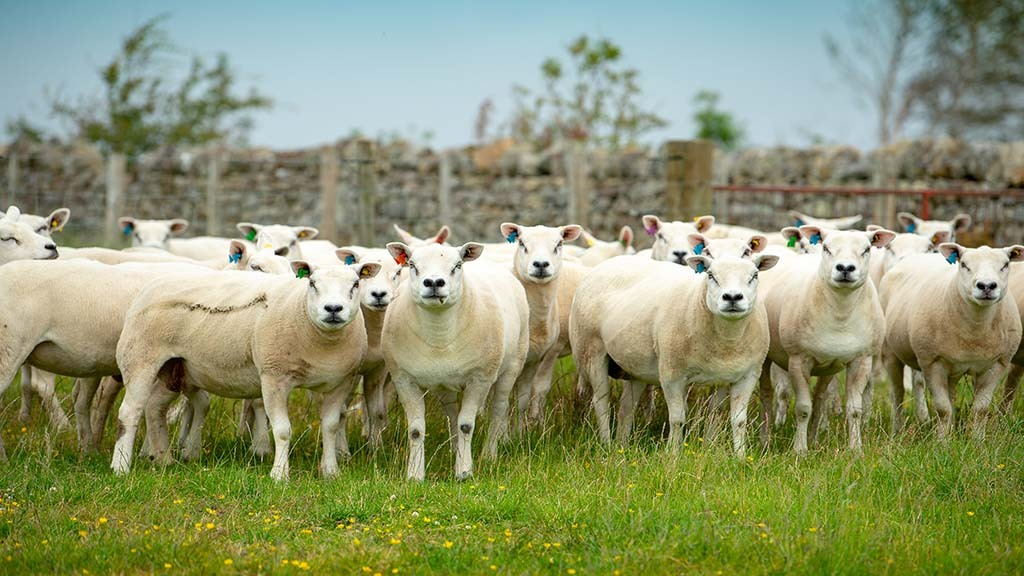 Breed Societies special: Breed societies must be fit for the future