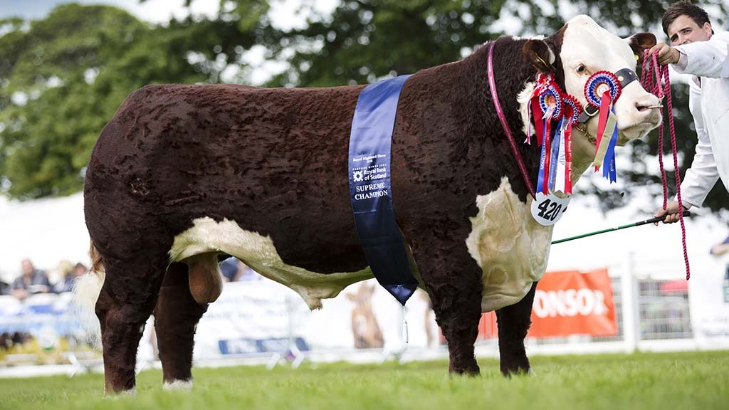 Breed Societies special: Herefords stride through history