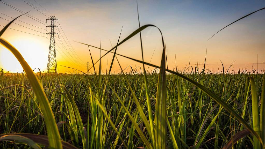 Government to review UK's global sugar tariff if imports flood market
