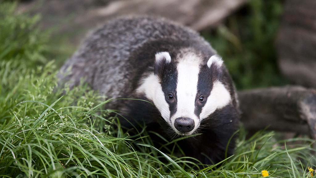 Defra policy could lead to bTB resurgence, farm chiefs warn