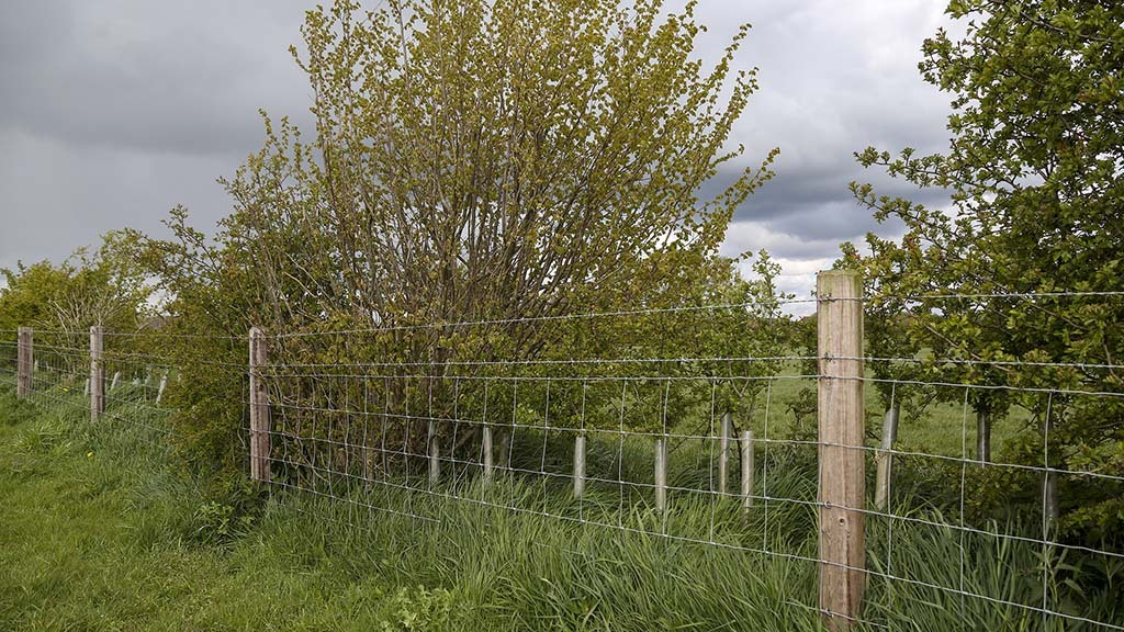 Virtually all grazing ground is ring-fenced, with two strands of barbed wire at the bottom and another strand buried underground