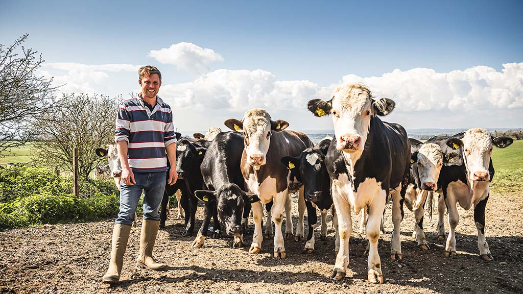 Beef from retired dairy cows proves successful on organic farm