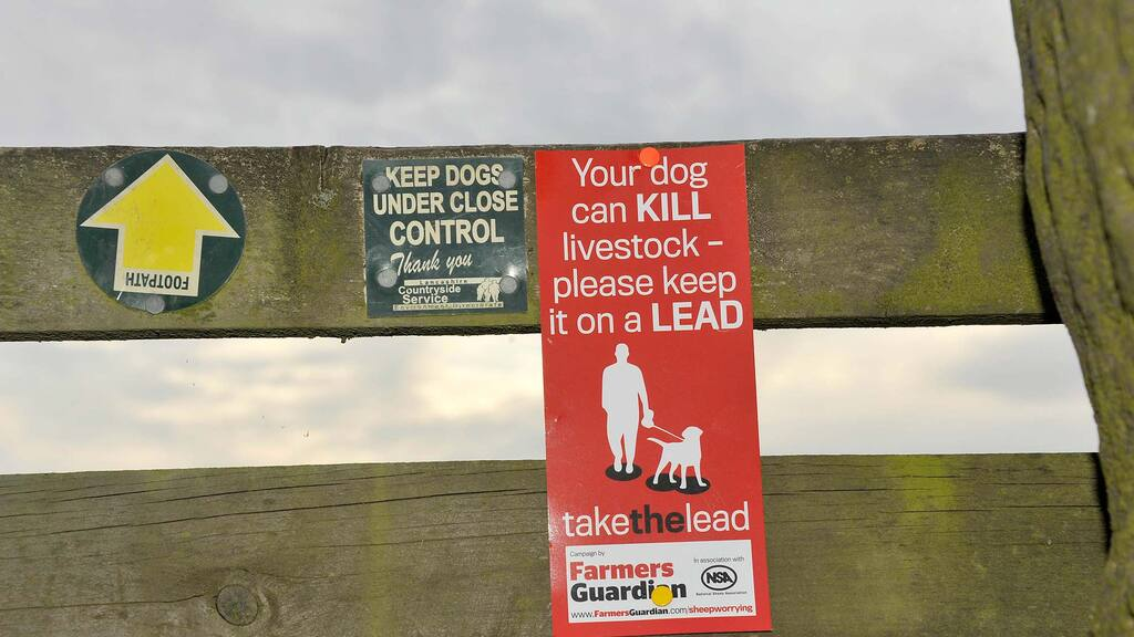 From the editor: Olivia Midgley - 'Government must go further to tackle livestock worrying'