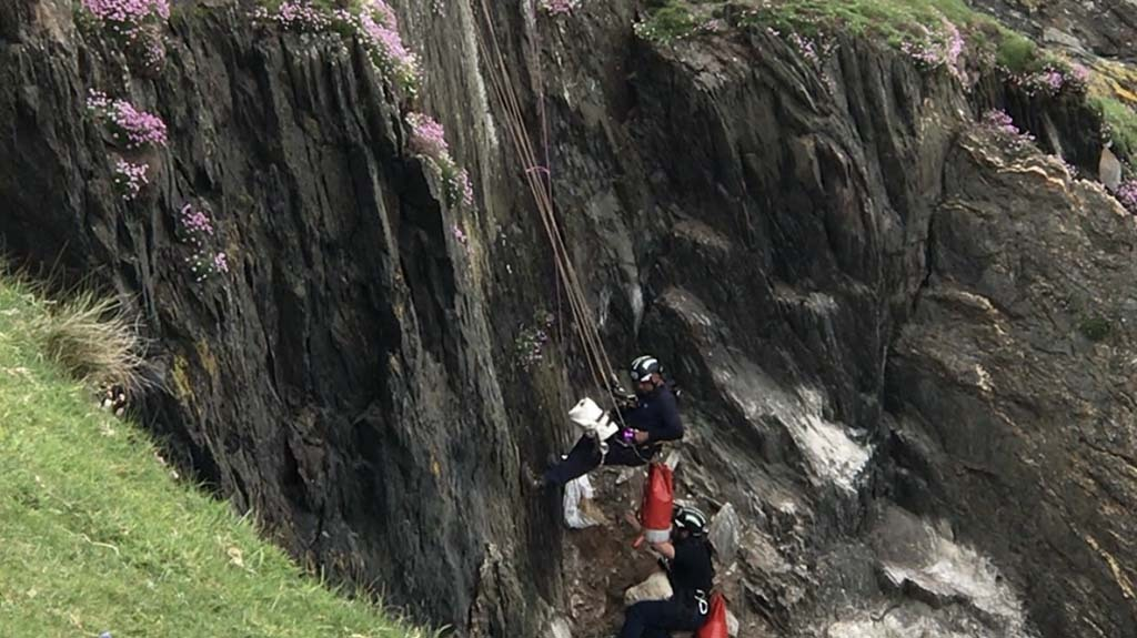 RSPCA calls for dogs on leads after lamb rescued from cliff edge
