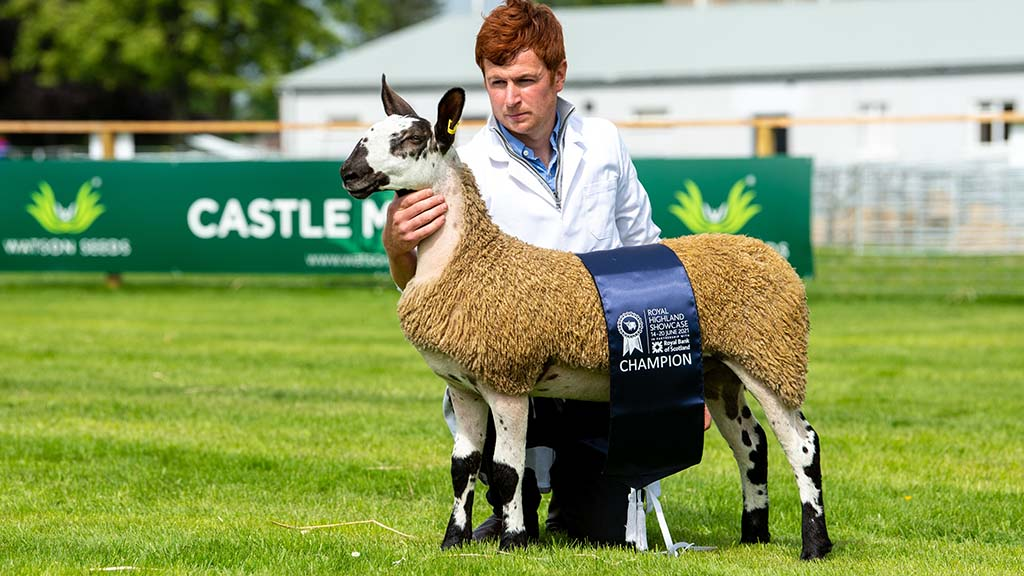 RHS21: Bluefaced Leicesters lead day two of sheep judging