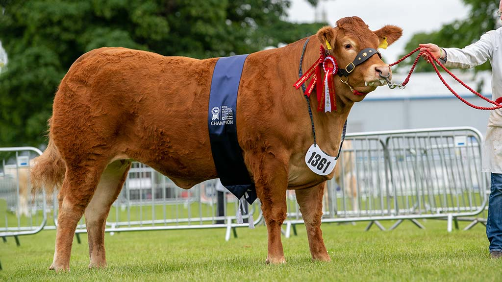 RHS21: Limousin victory in Royal Highland continental championship