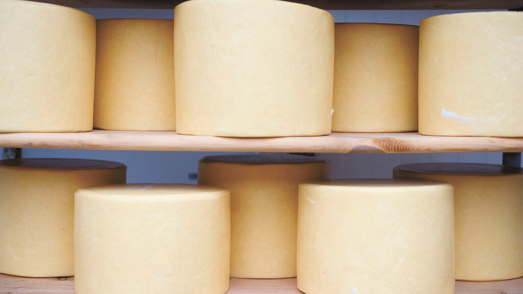 New £20m Welsh cheese factory