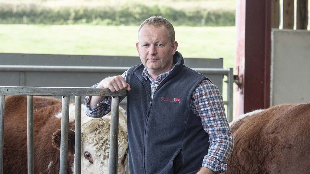 In your field: Mike Harris - 'Our senior stock bull has been given the summer off'