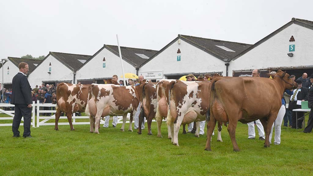 New format allows Great Yorkshire Show to go ahead