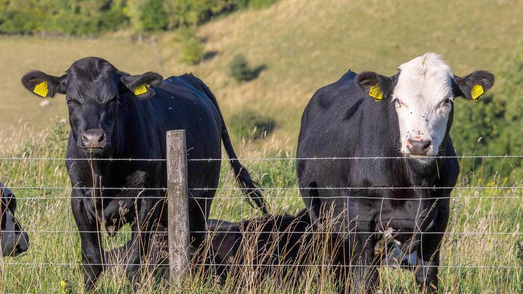 Vet's view: Making herd health planning work for you