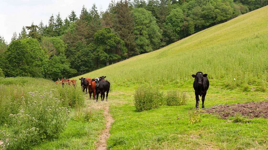 Welsh beef can capitalise on consumer demands
