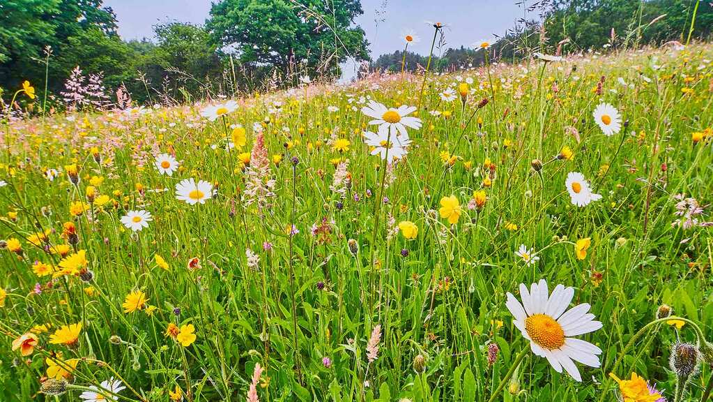 New Defra fund aims to boost private sector investment in nature recovery