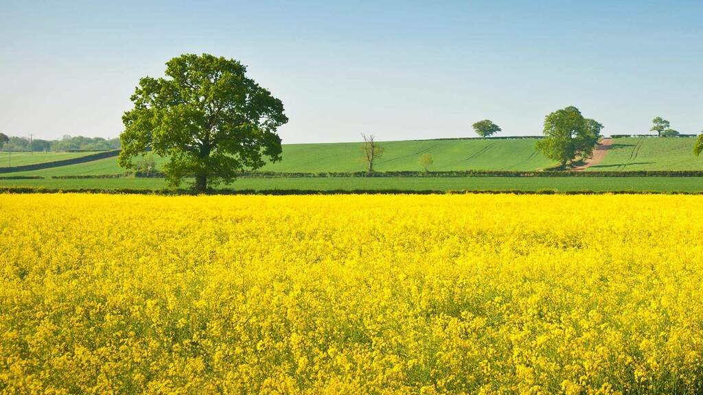 Get ahead this autumn with OSR Clearfield varieties