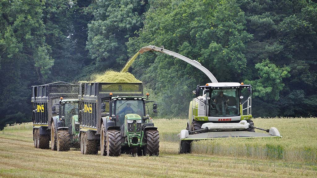Pictured harvesting wholecrop wheat, the Banks's purchased their second Jaguar 970 harvester this season. Chopping at a length of 12mm, it was averaging 180t/hr with a Claas 520 DirectDisc header.