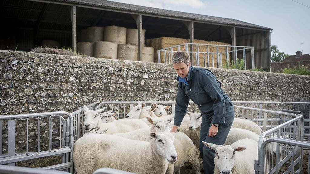 A participant on the Grow project at Saddlescombe Farm. Credit Rob Stothard.