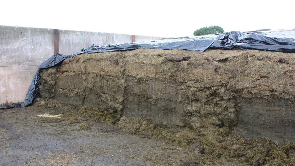 As well as lower fibre, many silages so far reported also have lower crude protein.