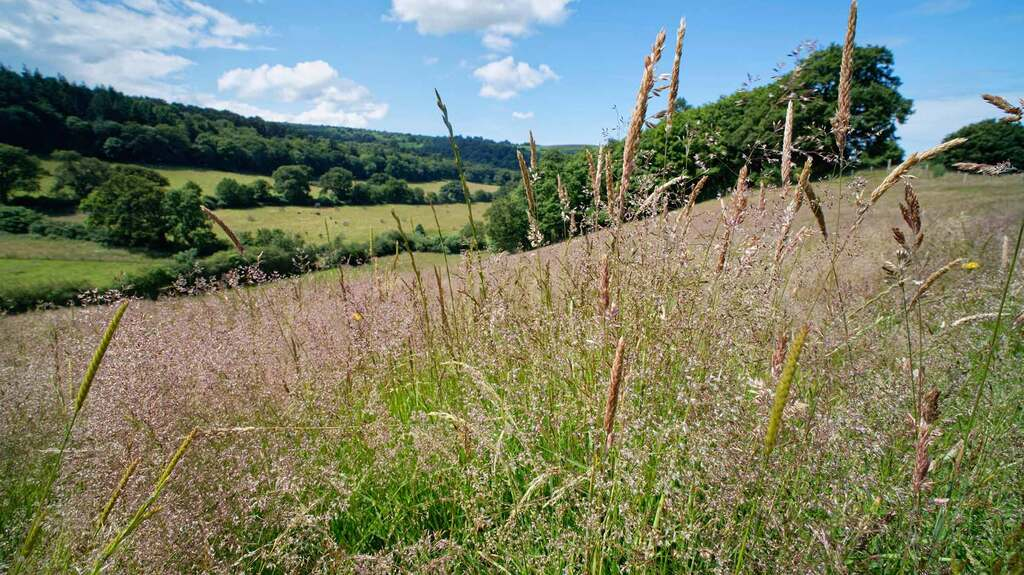 Signs of nature's recovery beginning to show thanks to farmers' efforts