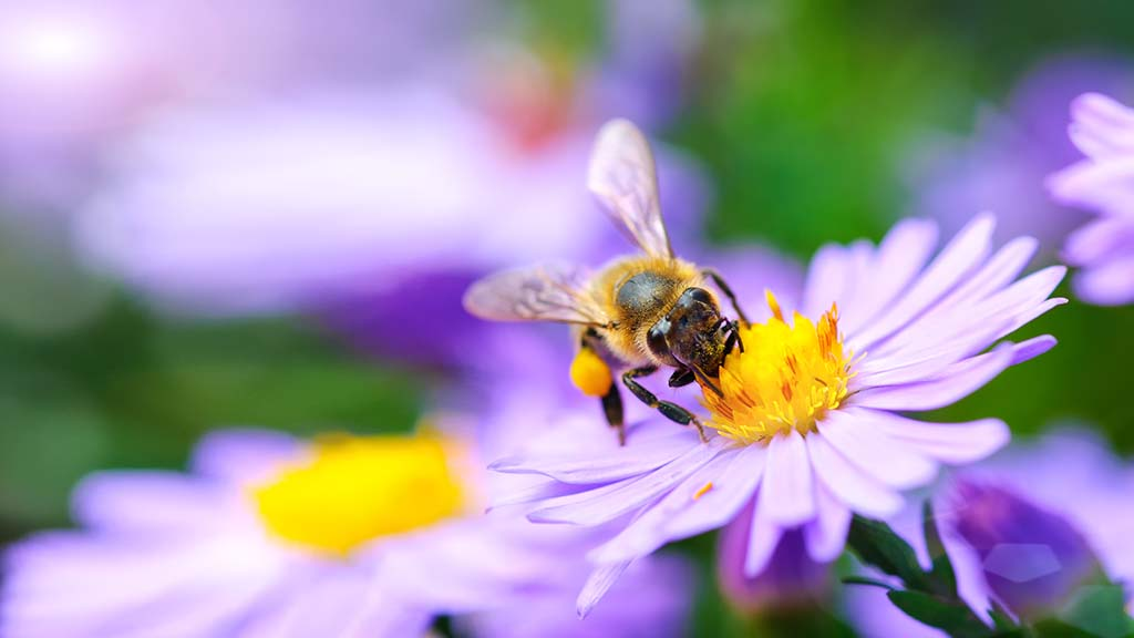 'We have noticed an increase in our bumblebee population'