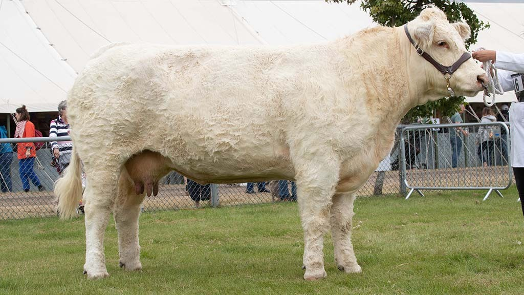 Charolais cow takes top spot at Edenbridge and Oxted show