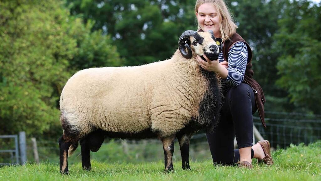 New Torddu record of 1,700gns set at Brecon