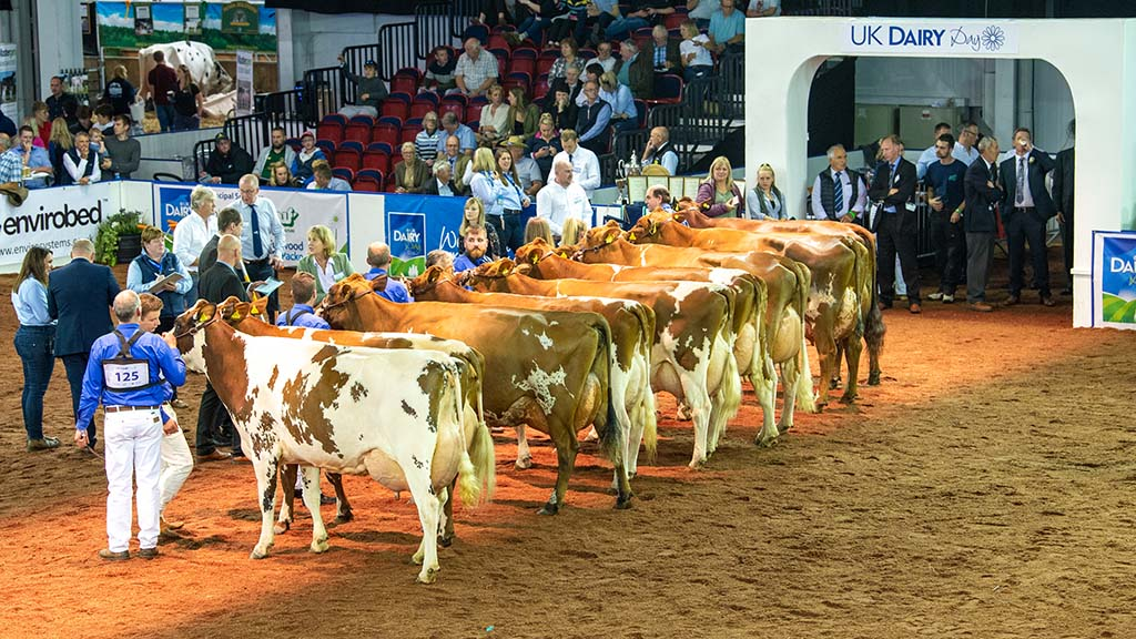 UK DAIRY DAY 2021: Dairy Day hosts four national breed shows