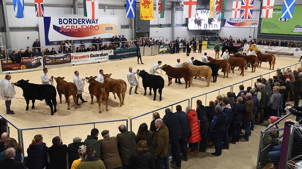 Judges announced for Agri Expo pedigree calf shows